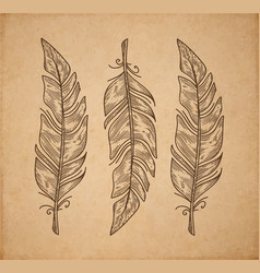 Three bird feather isolated on white engraving vector