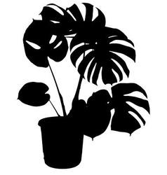 Monstera the potted plant vector
