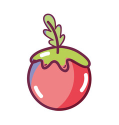 red healthy tomato vegetable icon vector image