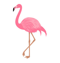 Flamingo isolated on the white background vector