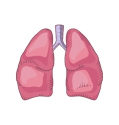 Lung detailed vector