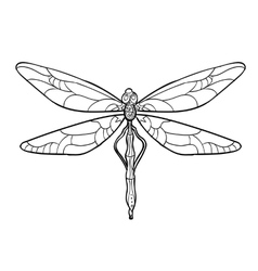 Elegant dragonfly silhouette at white background vector image vector image