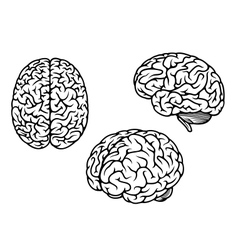 Human brain in three planes vector