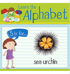Flashcard letter s is for sea urchin vector