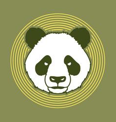 angry panda head cartoon fat panda face vector image