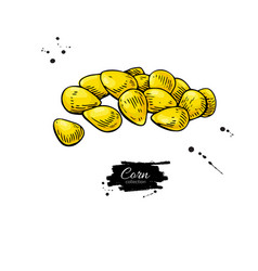 corn seed heap hand drawn vector image vector image