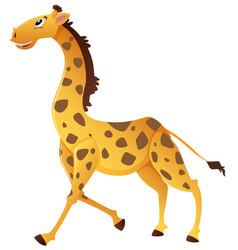 wild giraffe running on white background vector image vector image