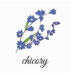 Chicory vector