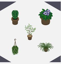 Isometric plant set of peyote plant flowerpot vector