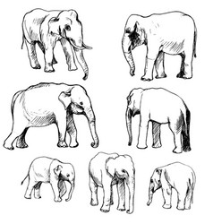 set of elephants vector image vector image