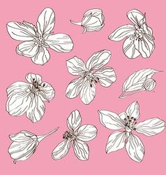 Cherry blossom set vector