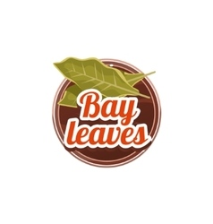 Bay leaves spice vector
