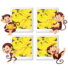 Happy monkeys eating banana vector image vector image