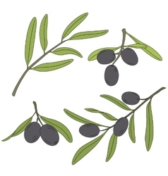 The branch of the olive tree with olives vector image