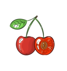 cherry on white background vector image