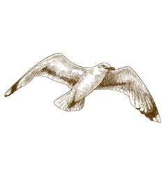 engraving drawing of flying gull vector image