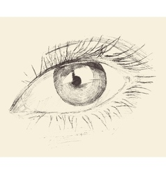 Eye sketch hand drawn engraved vector