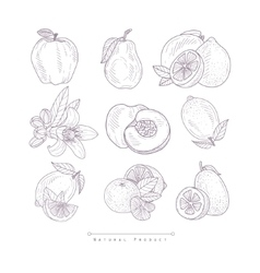 Fresh vegetables isolated hand drawn realistic vector