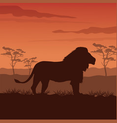 color sunset scene african landscape with vector image