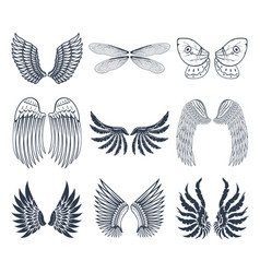 wings isolated animal feather pinion bird freedom vector image