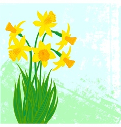 Card with bouqet of narcissus vector