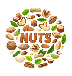 Cartoon nuts round concept vector