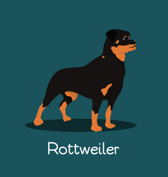 fierce rottweiler dog cartoon design vector image