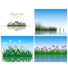 water grass vector image