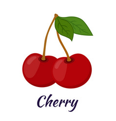 Garden fresh cherry sweet berries in flat style vector