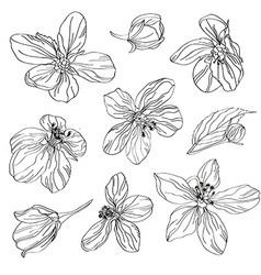 hand drawn cherry blossom flowers set vector image