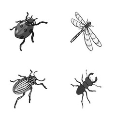 Arthropods insect ladybird dragonfly beetle vector