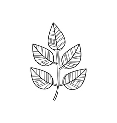 Branch Zentangle For Coloring vector image vector image