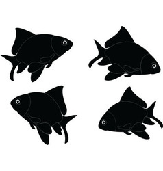 goldfish - vector image