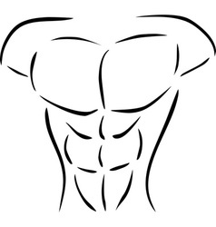 muscular body vector image vector image