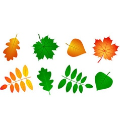 Set of Leafs vector image vector image