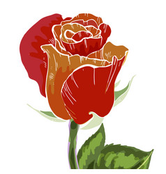 Close-up red and orange rose bud isolated vector