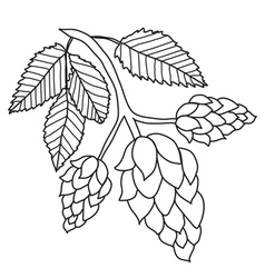 Hops plant black and white images isolated vector