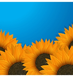 Sunflowers over blue vector