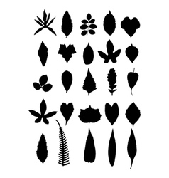 Leaves isolate on white background vector image