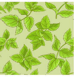 peppermint seamless pattern vector image vector image