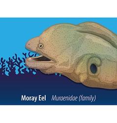 Moray eel swimming in the sea vector