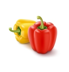 Two Yellow and Red Bulgarian Bell Peppers vector image