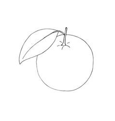 hand drawn orange contour fruits isolated vector image