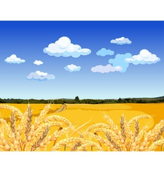 Landscape yellow field with wheat vector