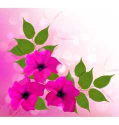 Nature background with pink beautiful flowers vector image vector image