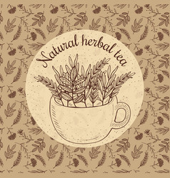 Sketch card - craft herbal tea vector
