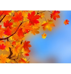 Background made of autumn leaves EPS 8 vector image vector image