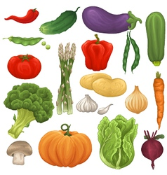 Collection of isolated vegetables vector image