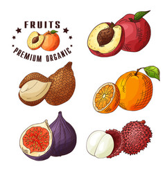 colorful food design with vector image
