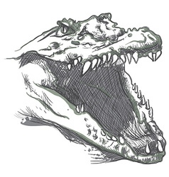 Crocodile - an hand drawn vector